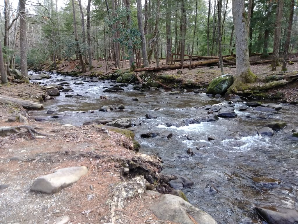 Stream in National Forest