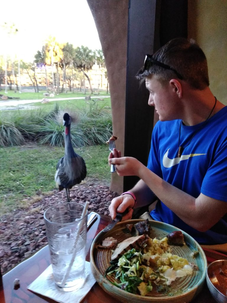 Teen boy eating with bird in Saana at Disney's Animal Kingdom Lodge