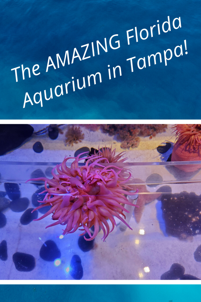 Tampa activities with kids