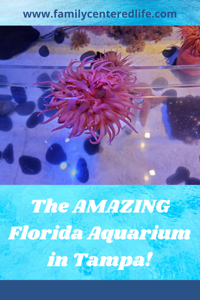 The Florida Aquarium in Tampa, Florida